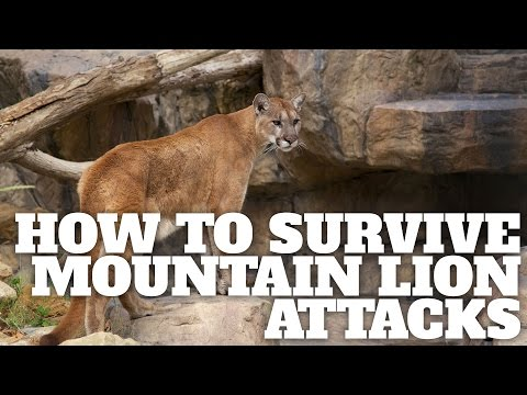 How to Survive Mountain Lion Attacks