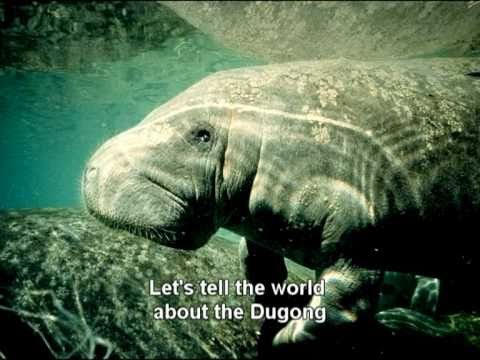 Dugong Song - Let's Love The Dugong