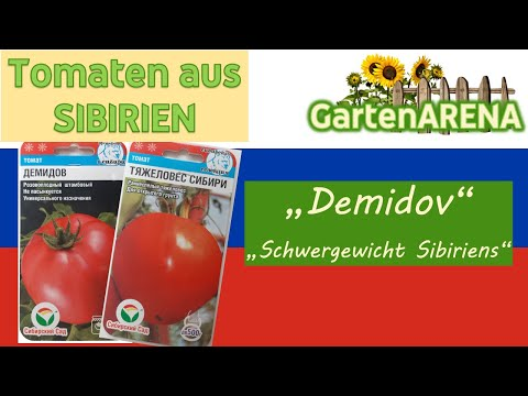 """tomaten-saatgut-aus-sibirien/russland-eingetroffen---sorten:-""""demidov""""-und-""""schwergewicht-sibiriens"""""""