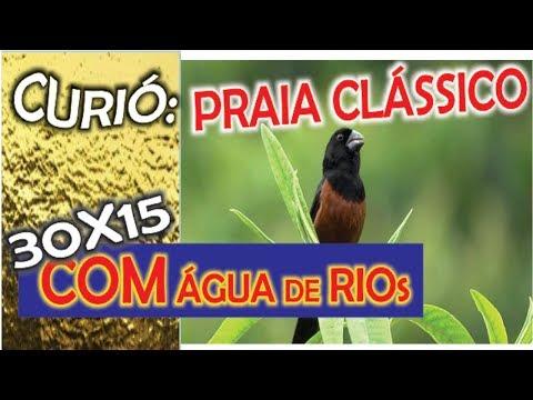 #16 Selo Ouro Curió Praia Grande Super Clássico Com A Sequência De 30x15 De água De Rio