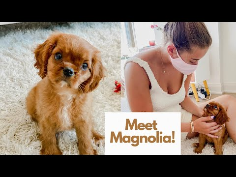 I Got A Puppy!//Meeting Magnolia, First Day/Night Together, First Training Session