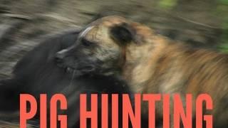 Traveling Baja California: Hunting for Pigs in Sierre de la Laguna