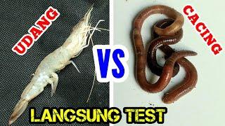 Review & Test Umpan Mancing || UDANG vs CACING