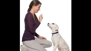 [how to train your dog] - how to potty train a puppy - how to house train your dog