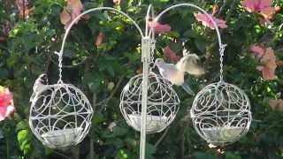 Bird Feeders On Stand, Just Outside The Porch.