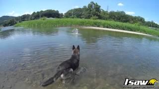 泳ぐのが大好きなチェリーさんを連れて川に遊びに行ってきましたよ〜