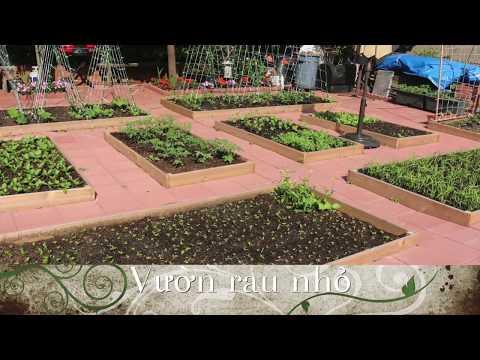 Thiết kế vườn trồng rau sạch đẹp sau nhà ở Mỹ _ Tập 5