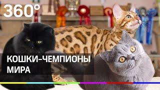 Топ кошек - чемпионов мира