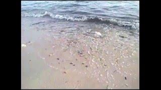 Desau suara ombak di pantai