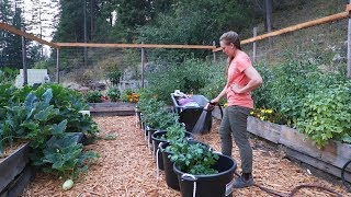 The Ultimate Guide to Growing A LOT of Food in a Small Space!