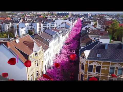 Kirschblüten Cherry Blossem Bonn Heerstr 2017 Airpicture Luftaufnahmen