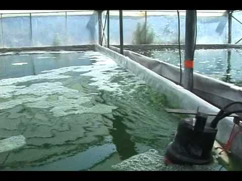 Family Spirulina Algae Farm in France