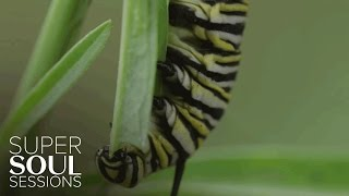 Monarch Eating Milkweed | SuperSoul Sessions | Oprah Winfrey Network