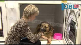 Челябинские зоозащитники выходили собаку с переломанными в ДТП костями