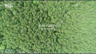 [FOREST IN DMZ] 4부 치유의 숲ㅣG1방송 20210722 이미지