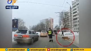 Russian Police Officers Stops Traffic | Helps Injured dog Cross the Road