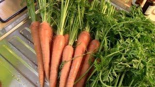 Rezept für Grüne Smoothies - Karotten-Power [VEGAN]