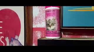 CAT FORTAN VITAMIN BULU UNTUK KUCING PALING BAGUS