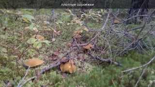 Грибные места Ленинградской области