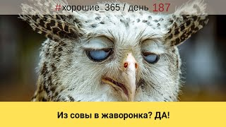 #187 Блог. Минск. Саморазвитие. Почему же вечером так хочется спать!