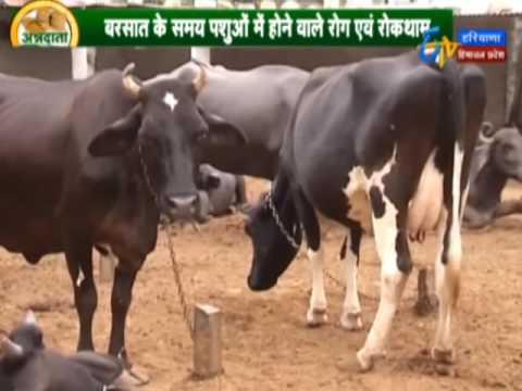 Dairy farm managment by -Dr Kajol