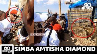 Diamond Bila Uwoga mbele ya SIMBA aunguruma SIMBA Acharuka rayvann amcheka mond