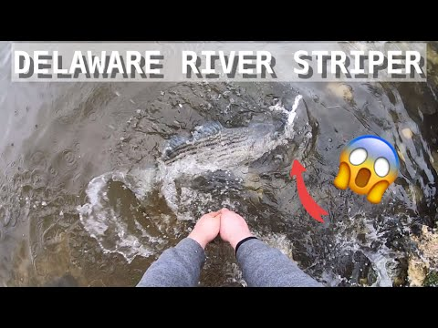 DELAWARE RIVER STRIPERS!