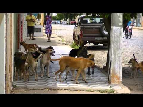 Briga de Cachorros por uma Cadela