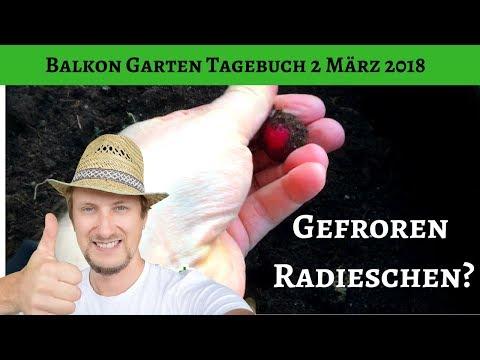 Balkon Garten Tagebuch 2 März 2018 - Gefrorene Radieschen