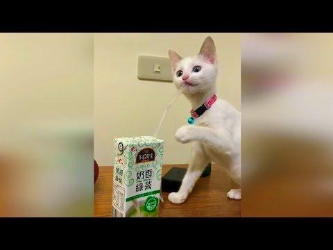 Смешные кошки Июнь 2019 Новые приколы с котами, смешные коты и кошки приколы 2019 funny cats #81