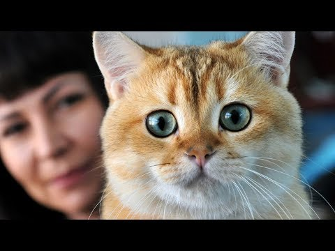 Gatti Pucciosi ❤️ Cute Is Not Enough ❤️ Prova a non ridere