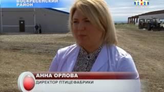 В Саратовской области начали производство мяса индейки.