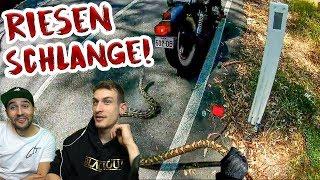 Motorradfahrer rettet Schlange!