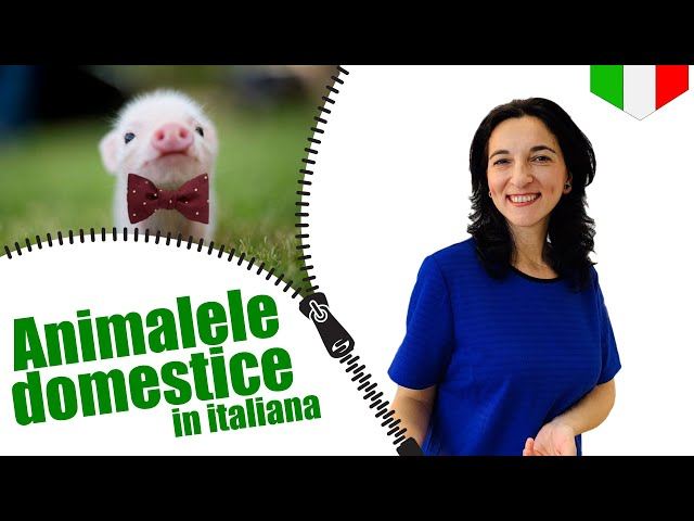 Invatam animalele domestice in italiana | VOCABULAR | Sub CC Ro