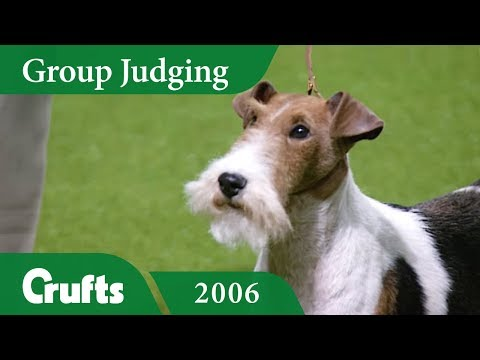Wire Fox Terrier Wins Terrier Group Judging at Crufts 2006