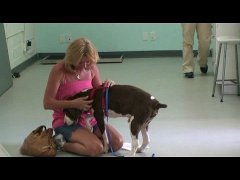 California Animal Rehabilitation – Sammi Walks