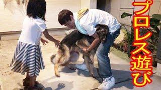 大型犬#ジャーマンシェパード マック君 家族で近所に買い物、一人隠れて...