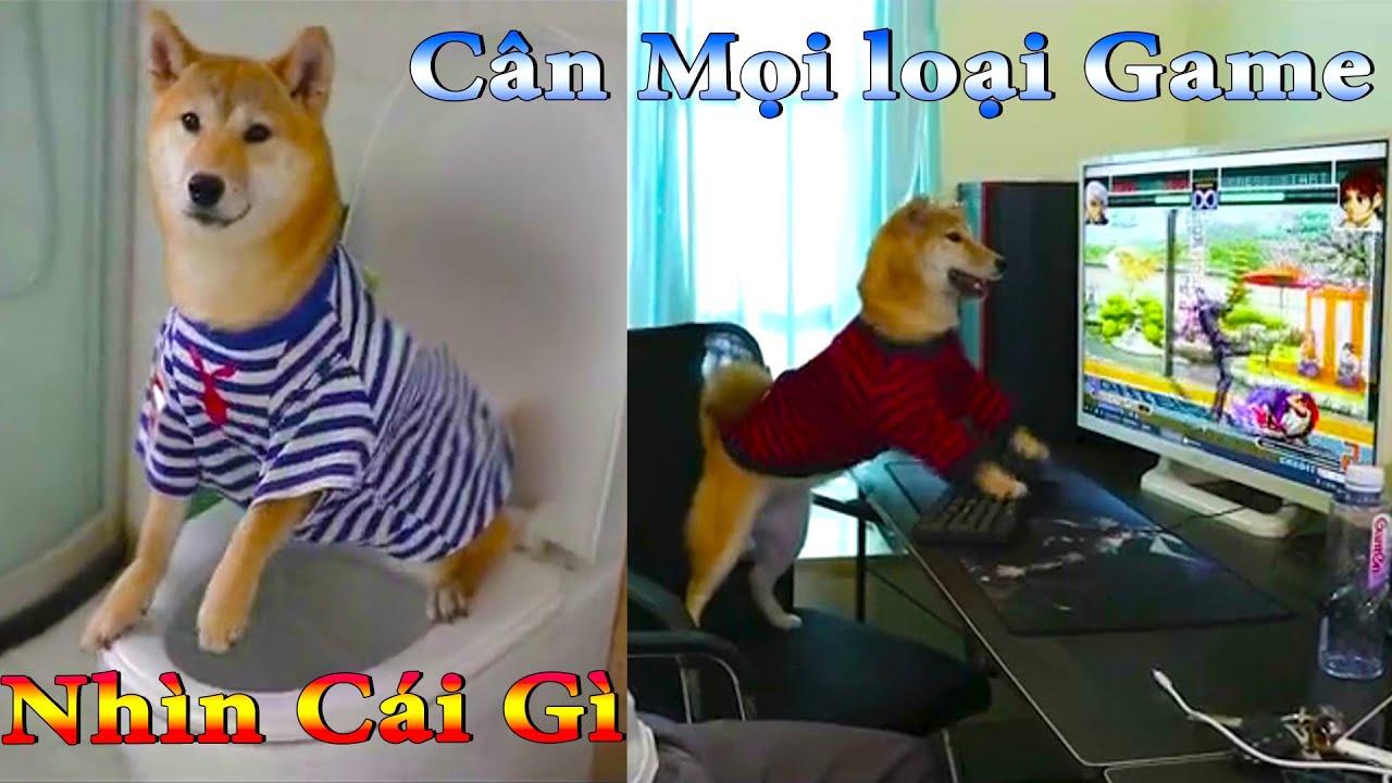 Thú Cưng TV | Dương KC Pets | Kem trẻ trâu Bướng Bỉnh | chó vui nhộn | funny cute smart dog