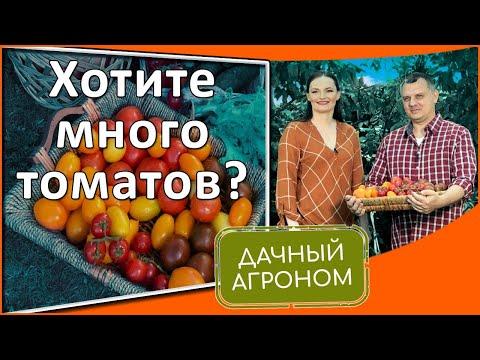 Лучшие томатные секреты! Томаты от рассады до результата!