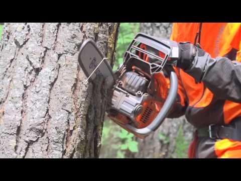 Trabajar con Motosierras. Derribo con problemas, por el estado de los árboles | Vídeo 19