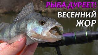 РЫБНОЕ АССОРТИ НА СПИННИНГ РЫБА ДУРЕЕТ Рыбалка на спиннинг 2021 Ловля окуня весной на микроджиг