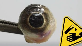 Fish eye vs. stomach acid | AcidTube-Chemical reactions