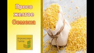 Семена Желтого Проса - Агроэксперт-Трейд