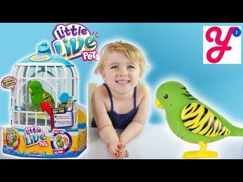 Интерактивная птичка в клетке Moose Little Live Pets Френки (28023)