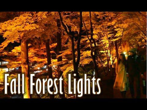 Korankei | Autumn leaves light display