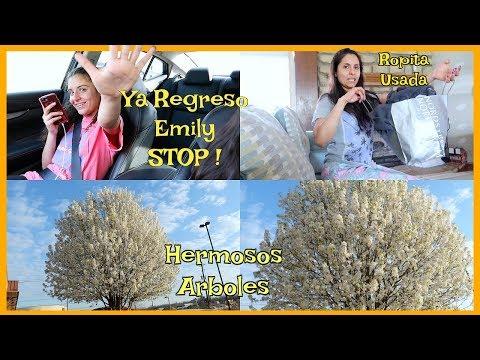 Ya Regreso Emily STOP ! 🛑 Los Arboles mas Bellos 🌳 Mas Ropita Usada 👗 - ♡IsabelVlogs♡