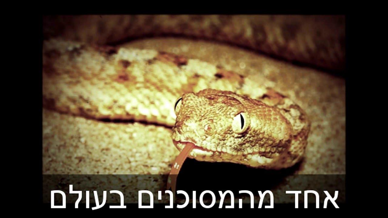 נחשים ארסיים בישראל