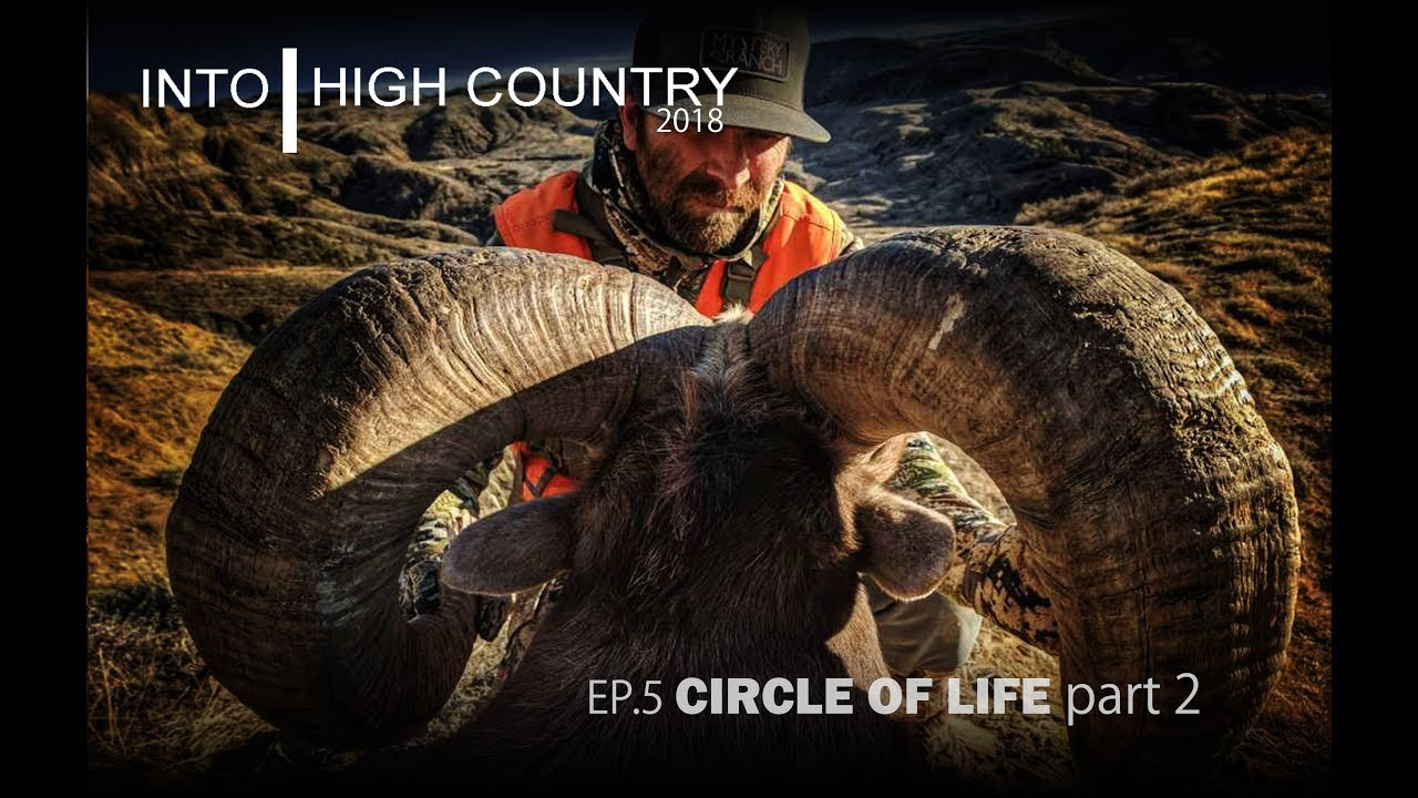 Video: Hunting Bighorn Sheep in Montana