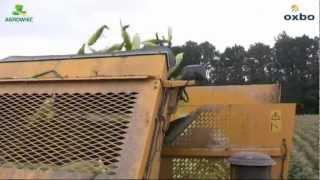 Zbiory kukurydzy słodkiej maszyną OXBO 2480 (sezon 2012)