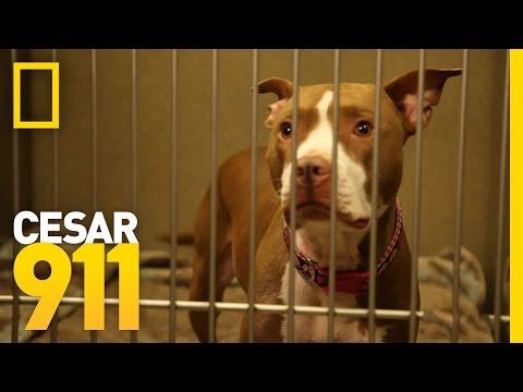 Case File Pupdate: Opal | Cesar 911